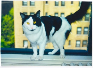 A photo I took of Roogie when he came to visit with me for 2 weeks in the summer of 2000.
